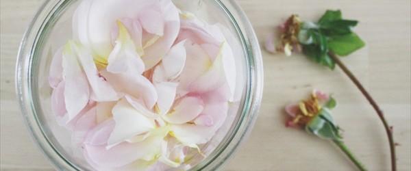 DIY to make rosewater at home