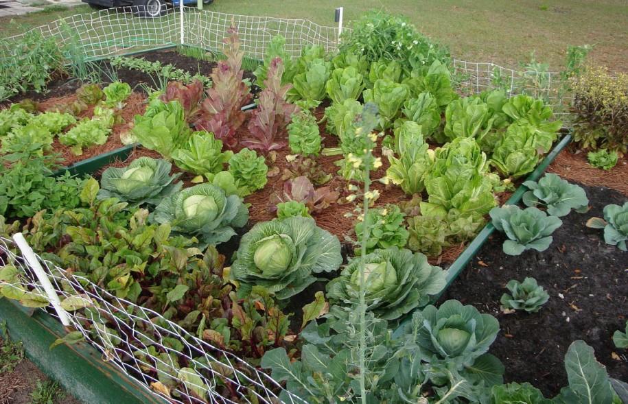 diy awesome vegetable gardening tips